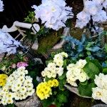 Zum-Edengarten_2021_Blumen_fruehjahr_5