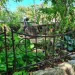 00056_2021_sommer_zum-edengarten